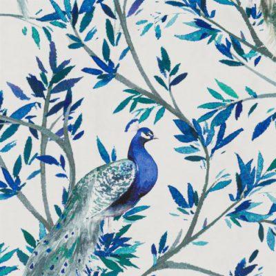 Peacock-Ocean
